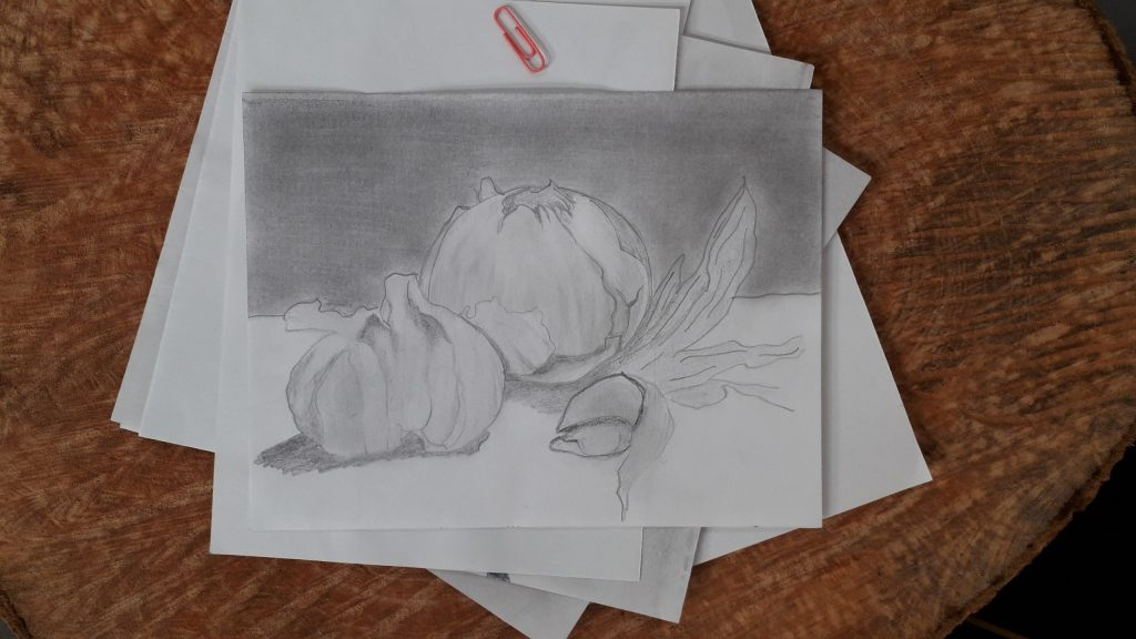 onion and garlic drawing