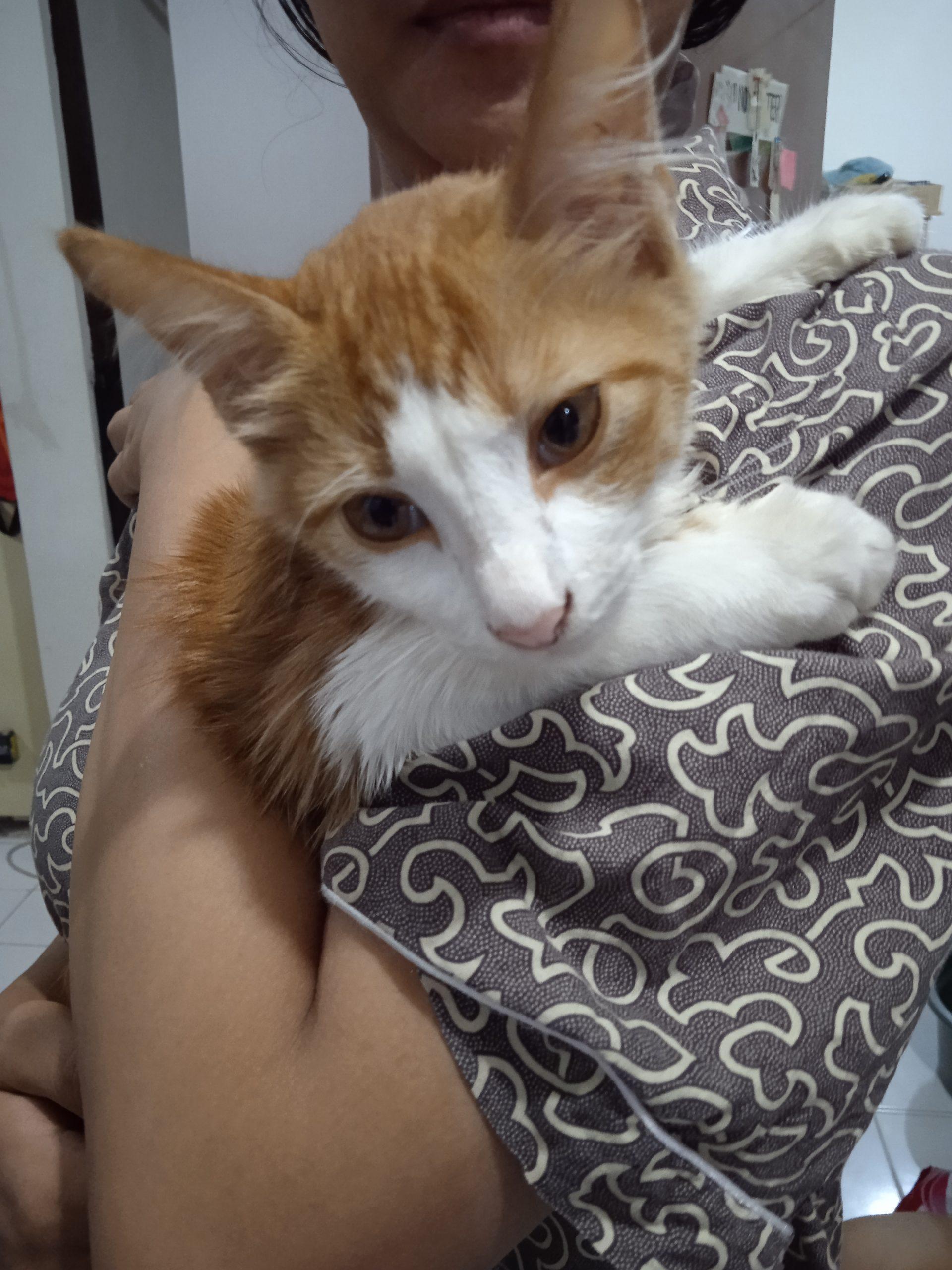 mayooo cat spraying no more
