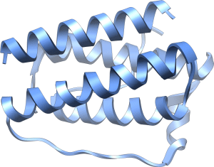 What leptin looks like